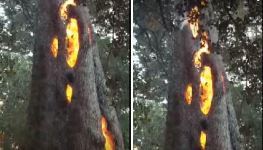 Il mistero impressionante dell 39 albero del diavolo blog - La porta del diavolo ...